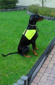 reflexní vesta nebo postroj pro psa