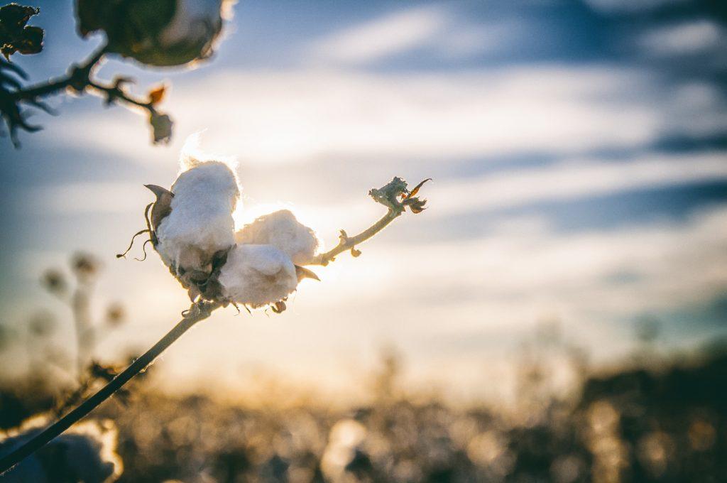 Ekologické a recyklované tkaniny